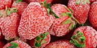 Комплект оборудования КМЦ-0606 Произ-во быстрозамороженных фруктов и овощей