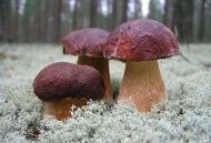 Комплект оборудования КМЦ-0607 Производство сушеных грибов